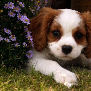 I vostri amati cani sono i benvenuti